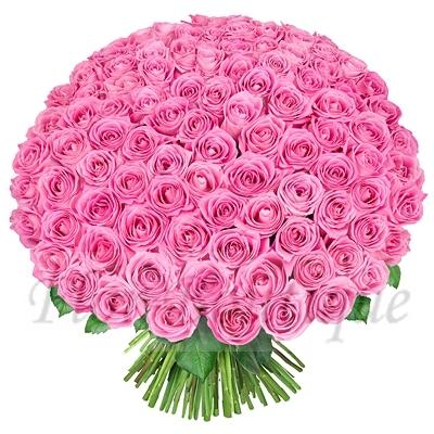 Букет из 101 розовой розы (стандарт)