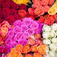 Роза микс 50 см (РОССИЯ)