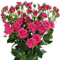 Роза Loveli lidia (Россия) 40 см кустовая